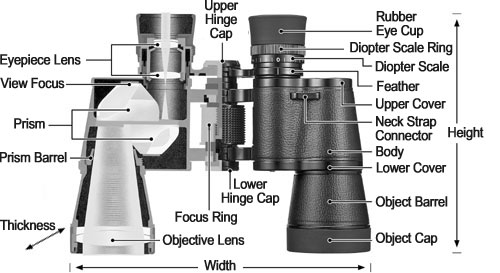 v-structure-of-binoculars.jpg